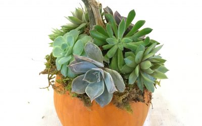 Succulent Pumpkin Virtual Workshop